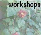 logo_workshops_site copy