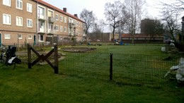 Groentjes uit Kruiskamp maart 2015