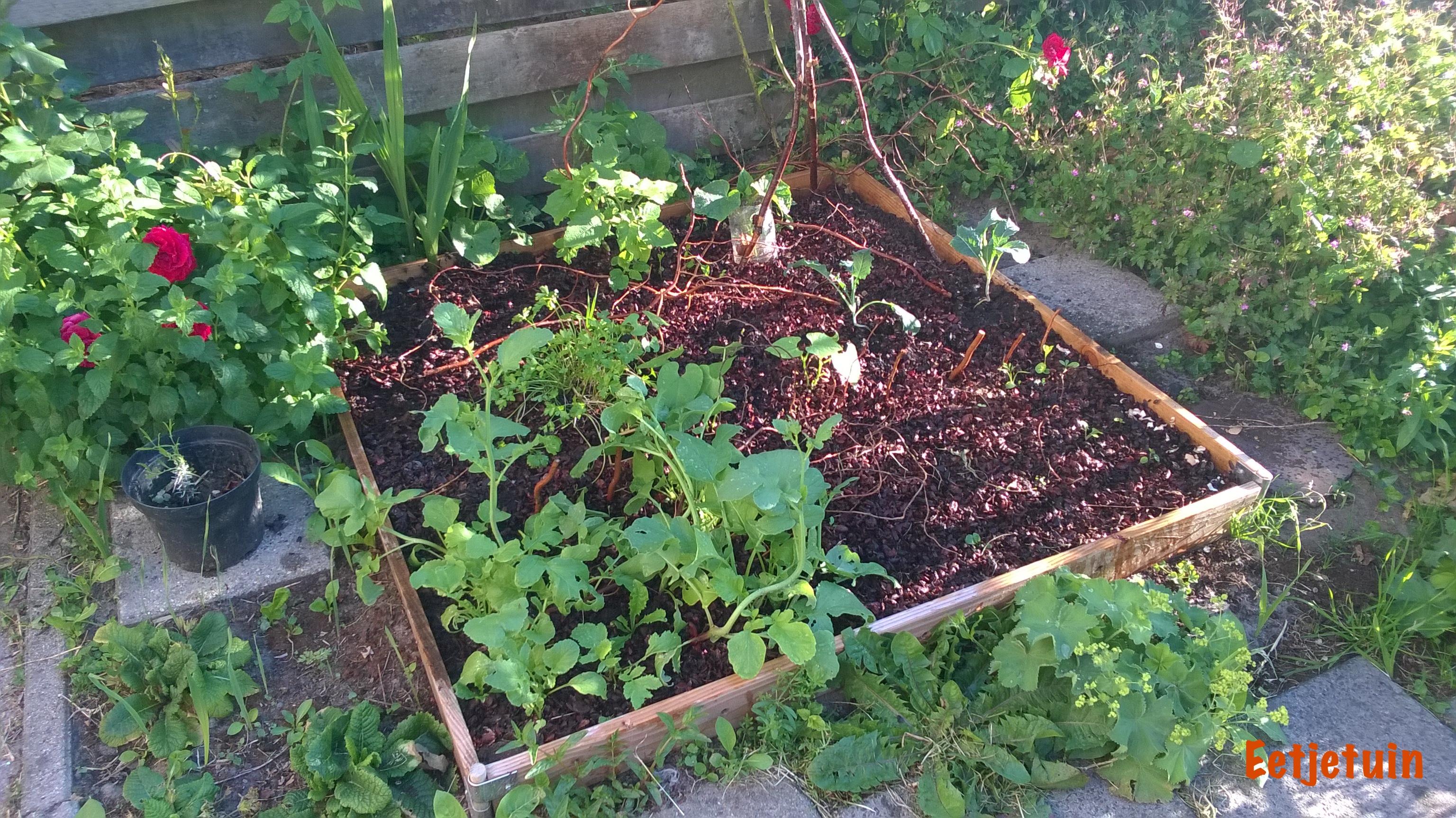 De m2 moestuin in juni eet je tuin for Tuinontwerp eetbare tuin