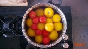 tomatenindepan-2015